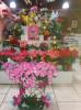 Floricultura Girassol Foto 1 - Guia CB