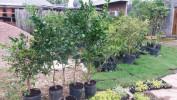 Floricultura Girassol Foto 11 - Guia CB