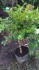 Floricultura Girassol Foto 9 - Guia CB