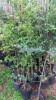 Floricultura Girassol Foto 13 - Guia CB