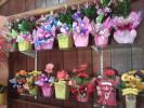 Floricultura Girassol Foto 17 - Guia CB