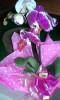 Floricultura Girassol Foto 21 - Guia CB
