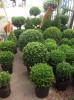 Floricultura Girassol Foto 25 - Guia CB