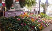Floricultura Girassol Foto 30 - Guia CB